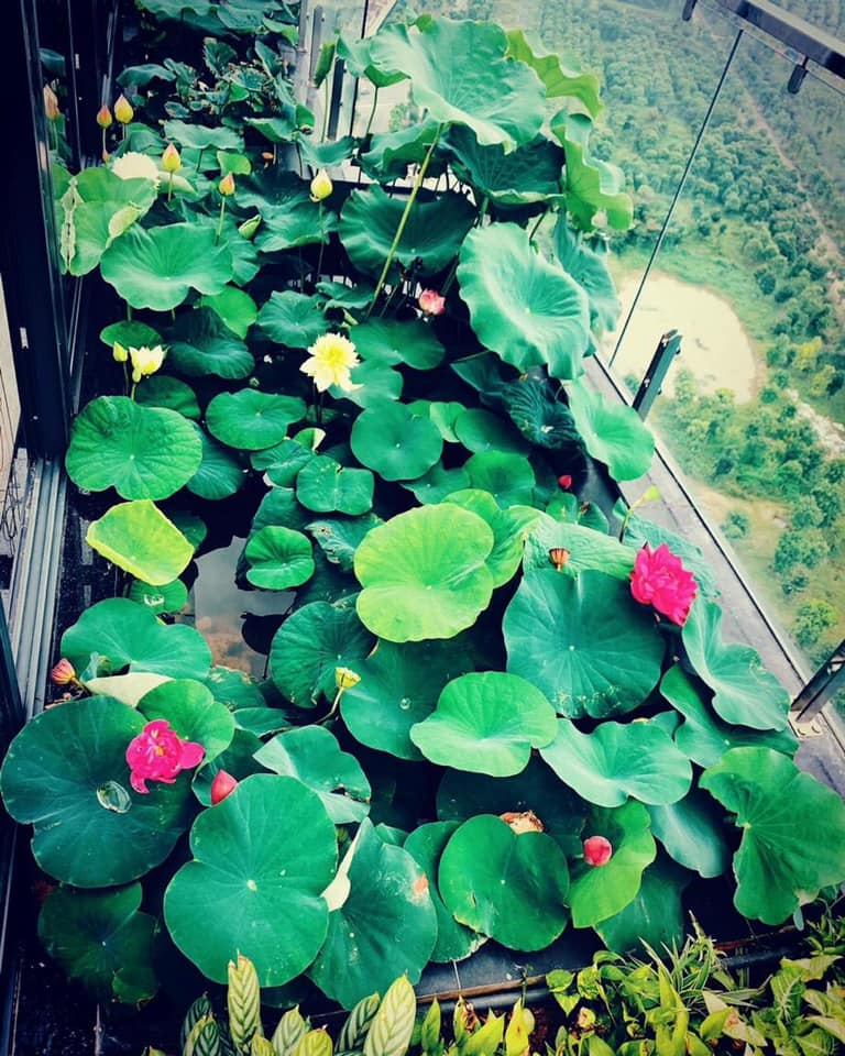 ảnh thực tế 3 đầm sen tại căn hộ Penthouse tại Ecopark